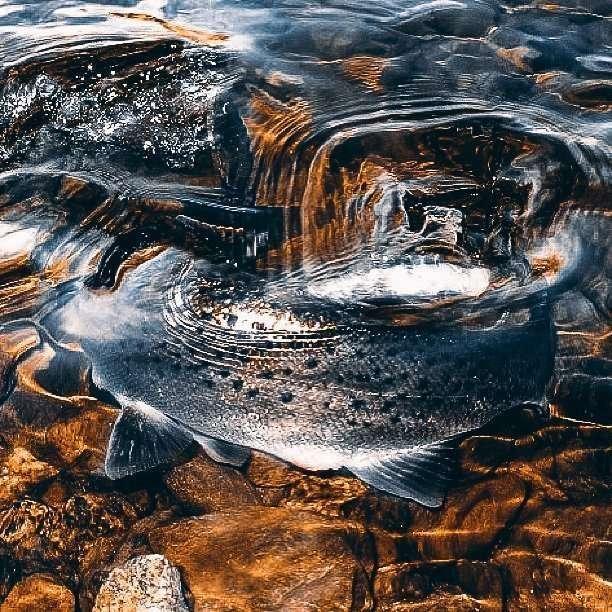 Seeking Sea Trout : Bait Fish Lure
